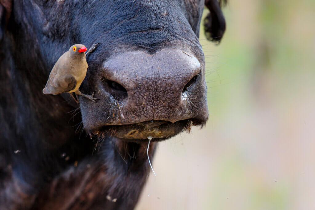 5 animais hematófagos que você não conhecia