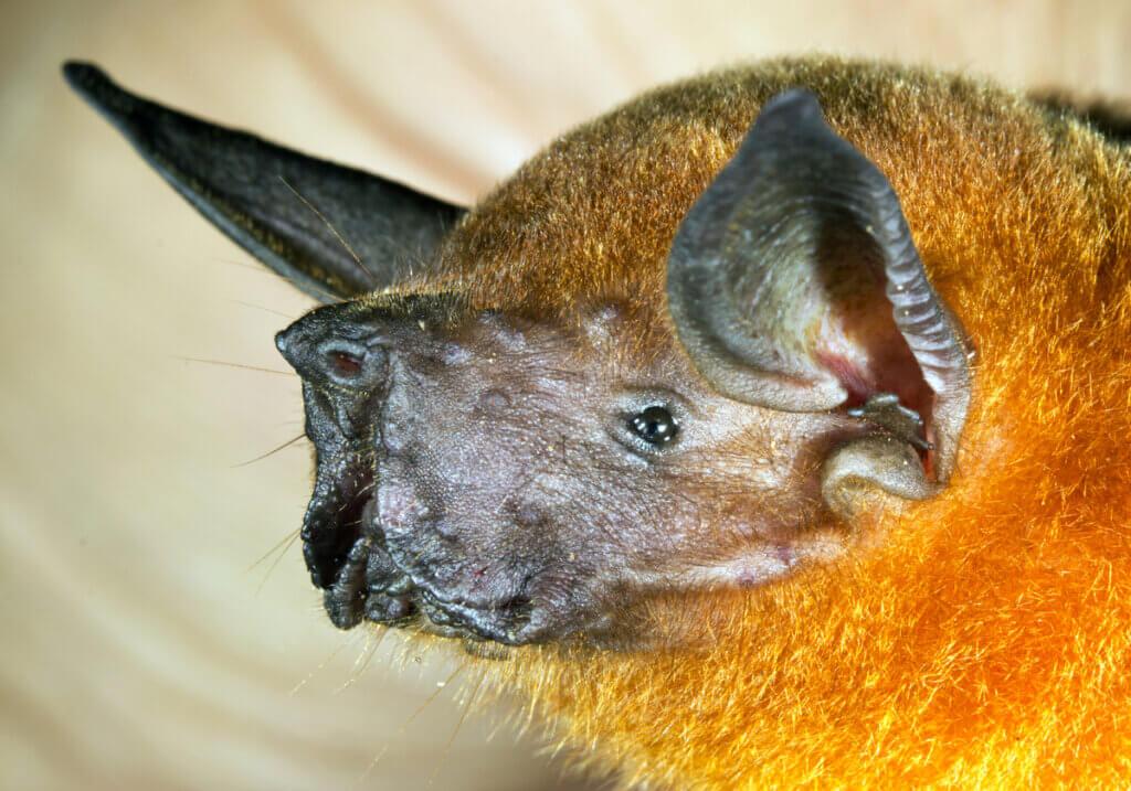 6 curiosidades sobre morcegos