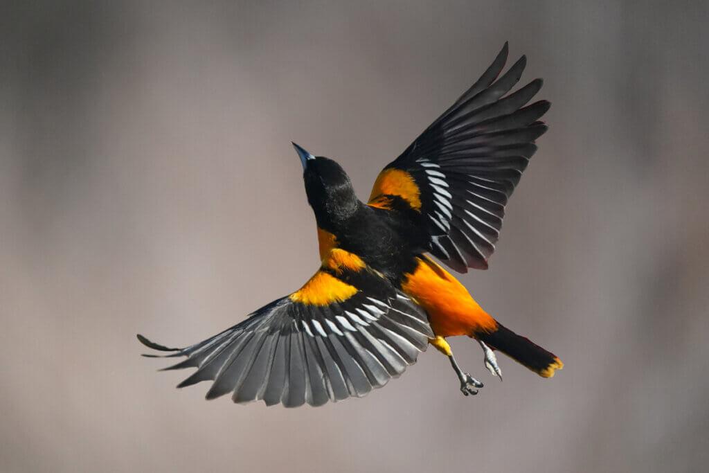 Por que os pássaros voam?