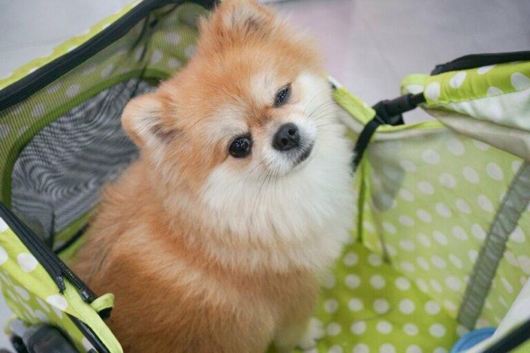 Creches para cães: vantagens e desvantagens