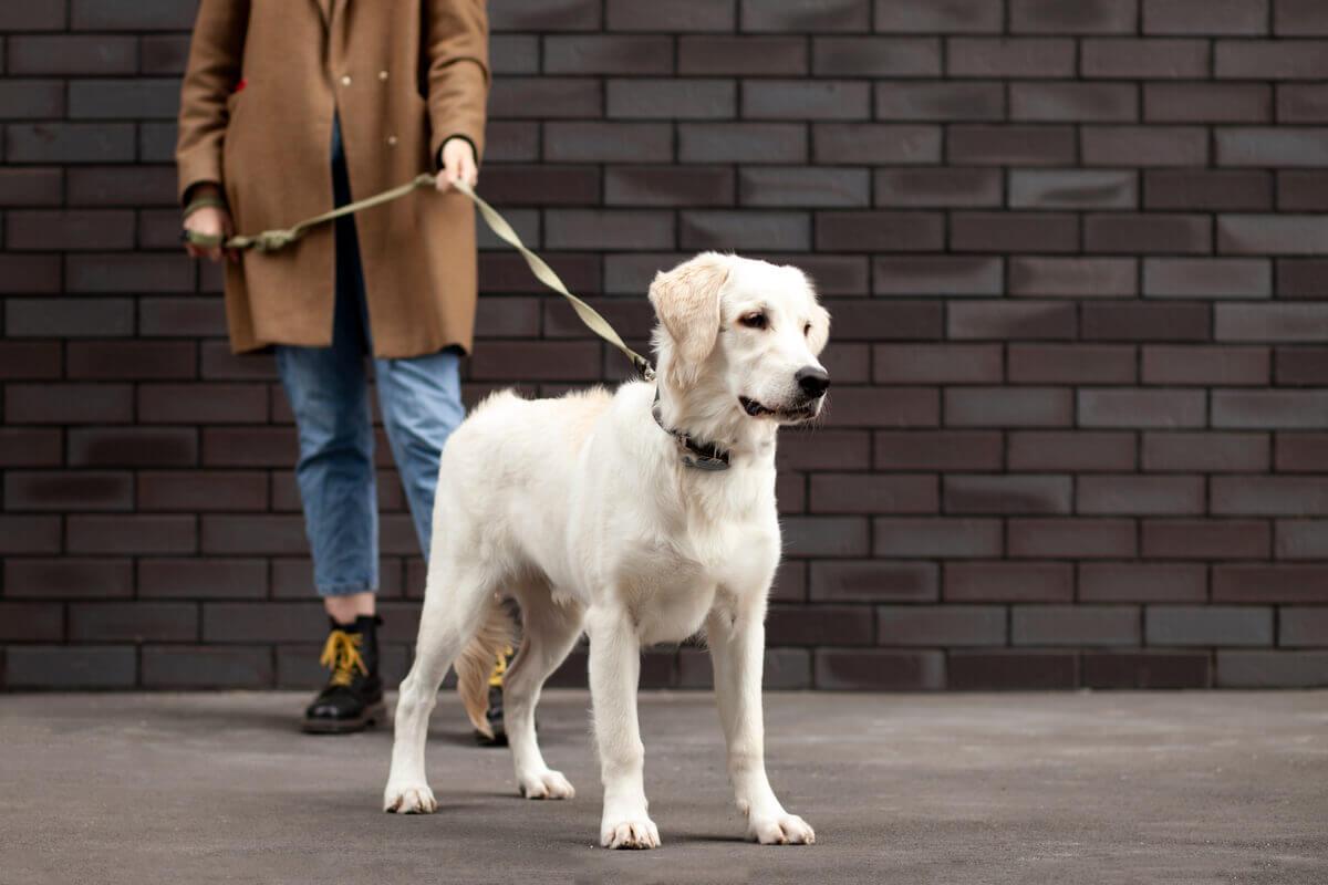 A repreensão é uma das coisas que você não deve fazer com seu cão.