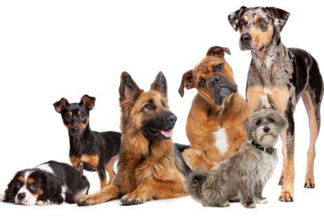 A origem dos cães é muito antiga.