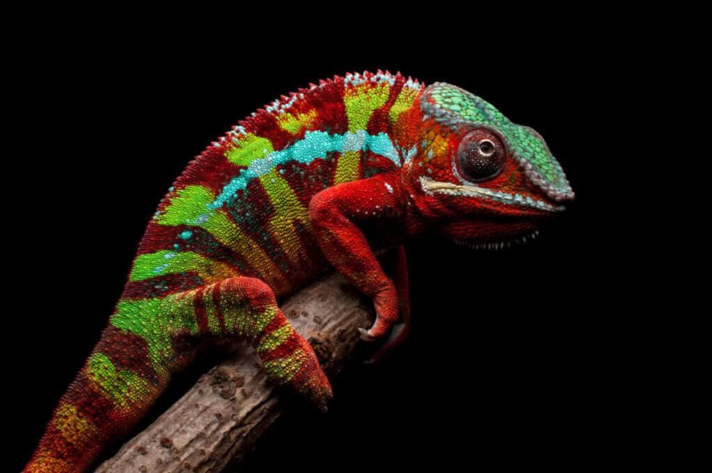 9 animais de Madagascar