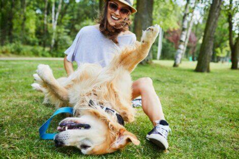 Por que os cães gostam de ter a barriga coçada?