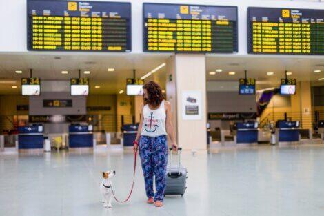 Existem raças de cães que não podem viajar de avião.