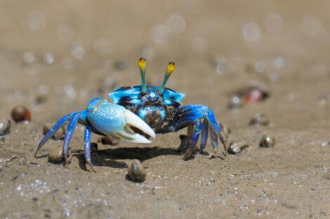 Existem muitos tipos de caranguejos.