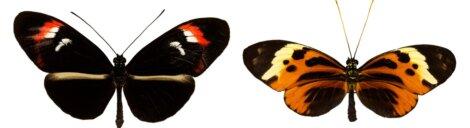 Algumas borboletas com cores diferentes.