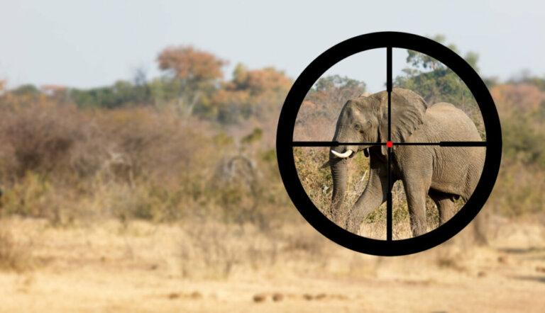 Por que alguns elefantes têm presas e outros não?