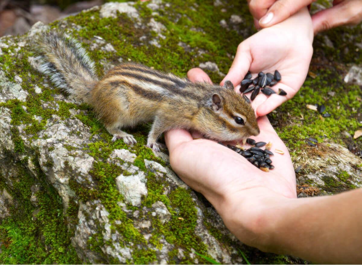 Cuidar de um esquilo pode ser difícil.