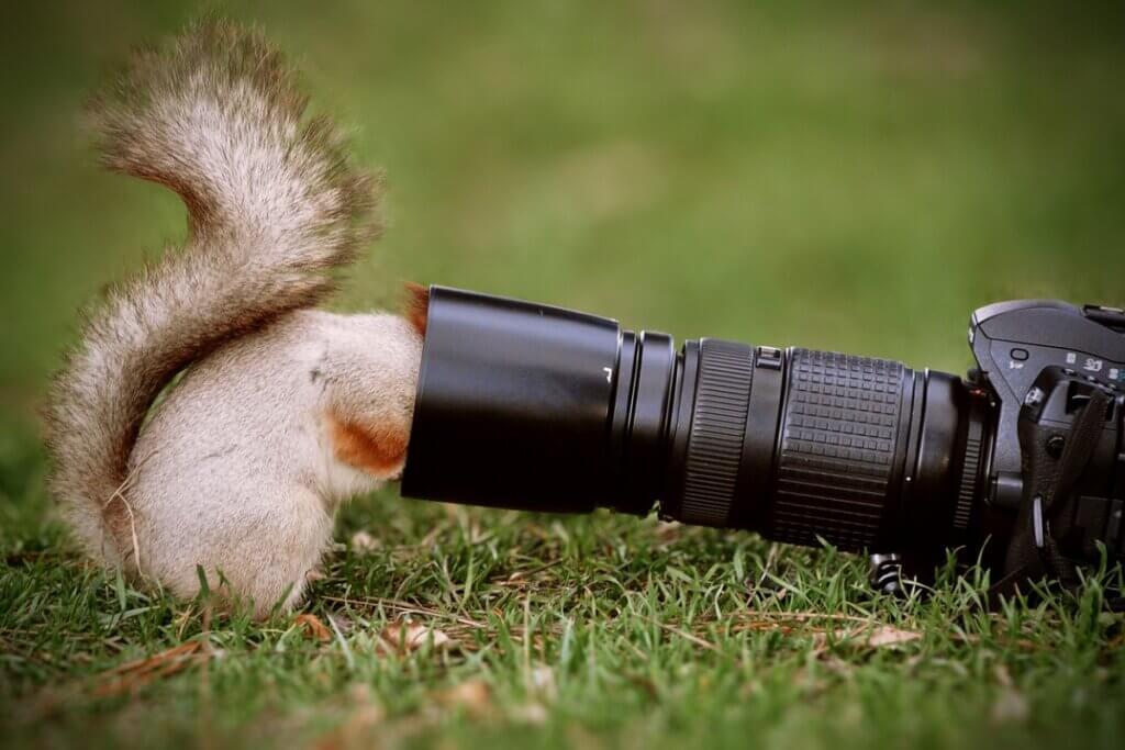 Os 6 melhores documentários de animais