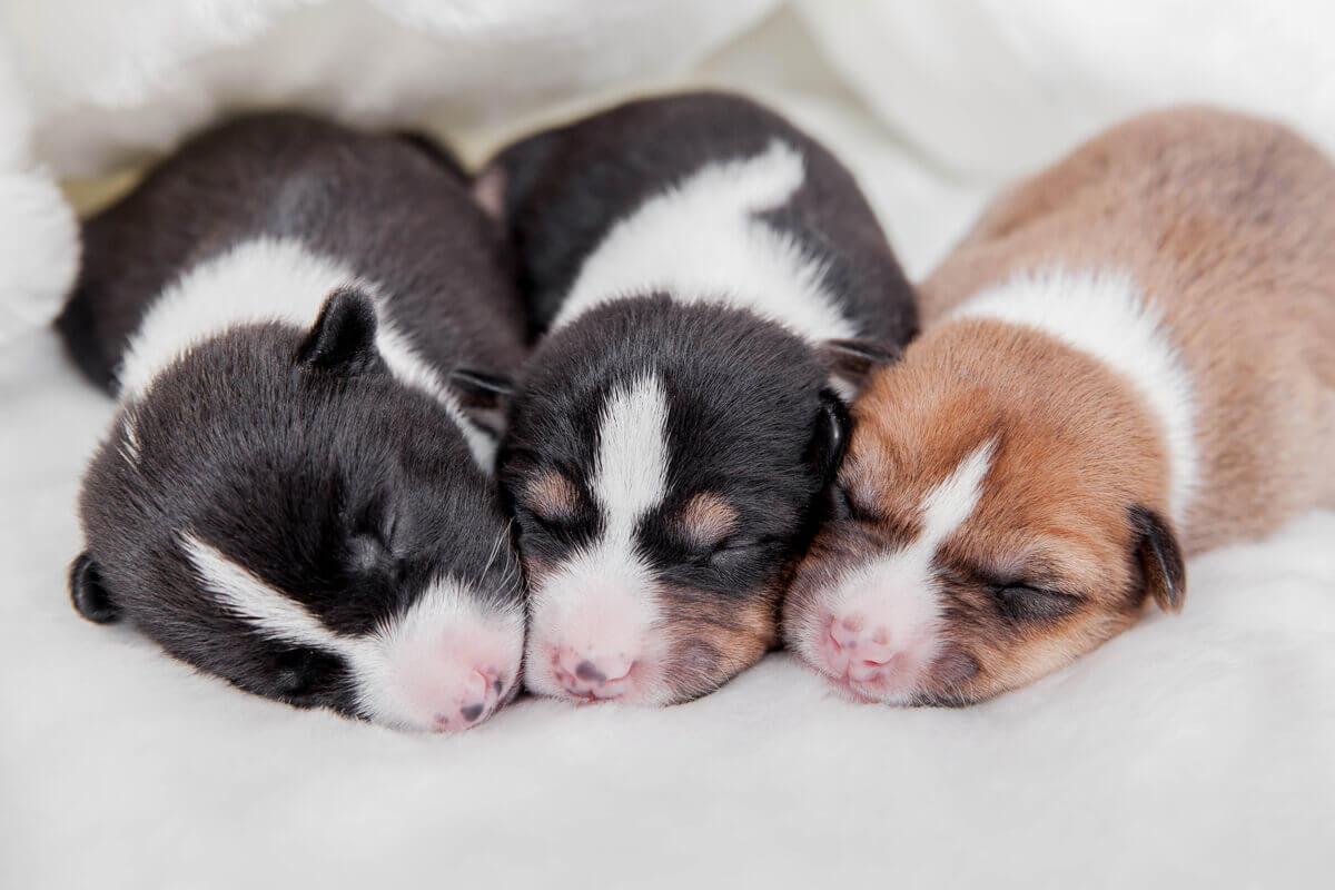Três cachorrinhos juntos.