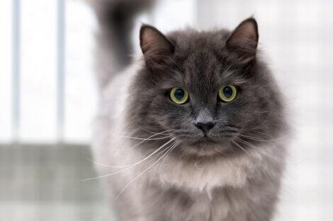 Um gato olha para a câmera.