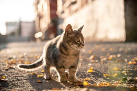 Um pequeno gato de rua.