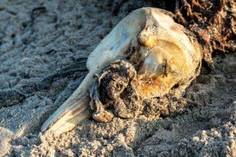 Um golfinho morto na praia.