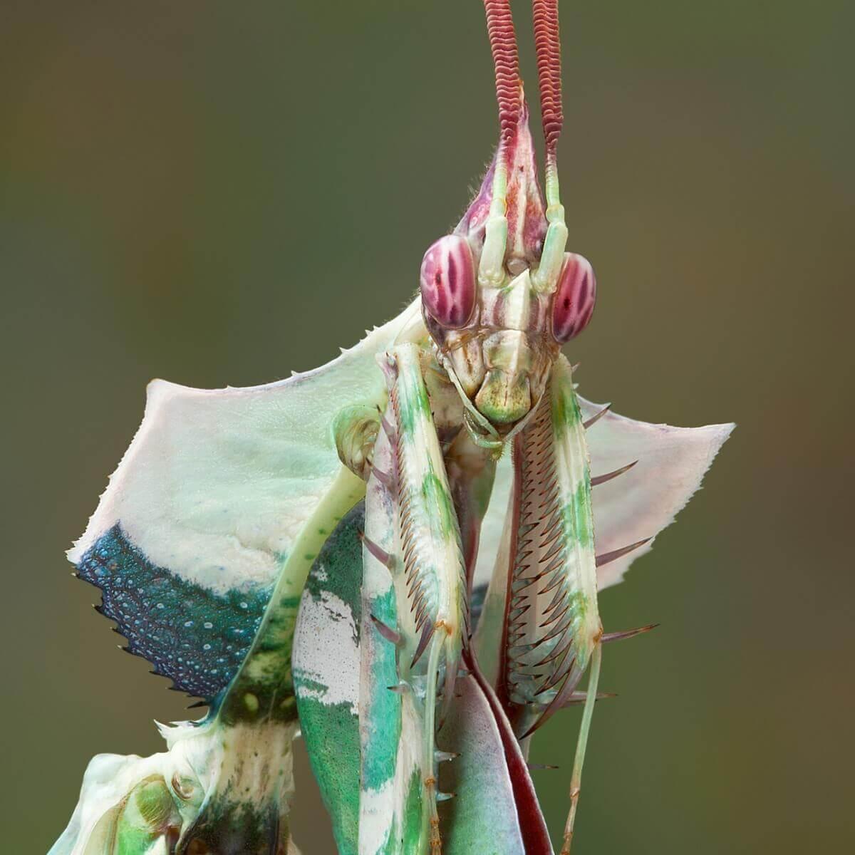 Louva-a-deus: um dos tipos de insetos