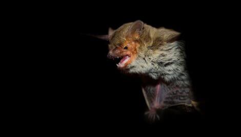 Um morcego em um fundo preto.