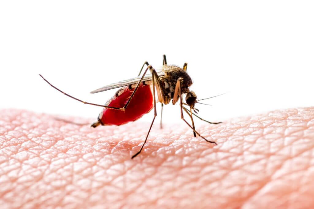 Por que os mosquitos picam algumas pessoas e outras não?