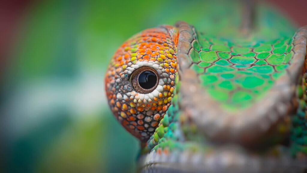 5 animais com olhos grandes