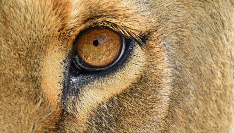 Os 6 mamíferos com os sentidos mais desenvolvidos