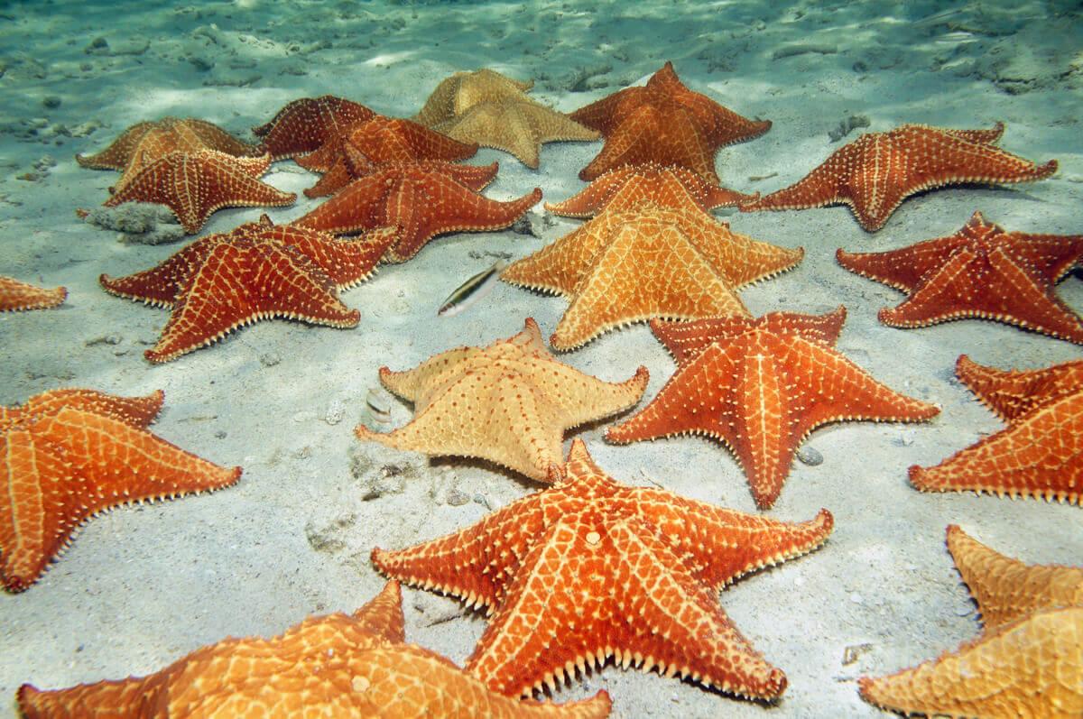 Outros tipos de estrelas-do-mar