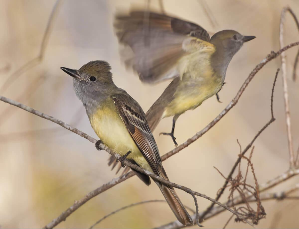 Alguns pássaros voam pelos galhos.