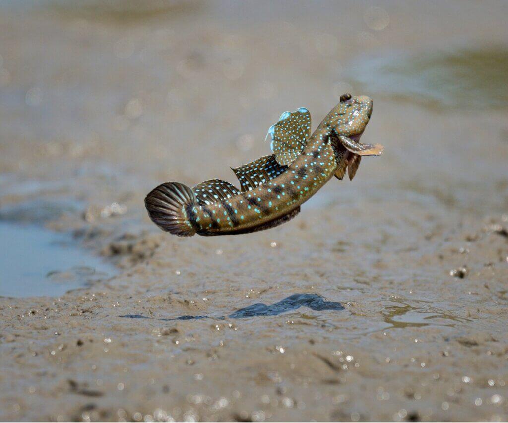 7 peixes que respiram fora d'água