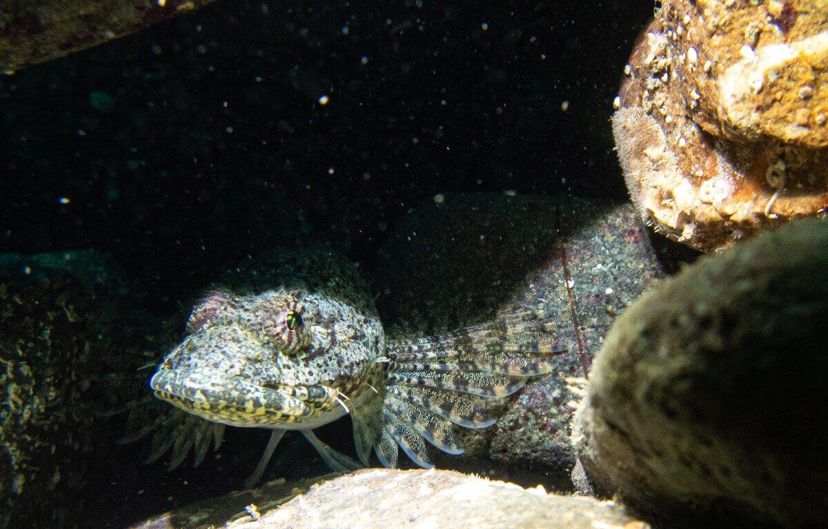 Um peixe em uma caverna