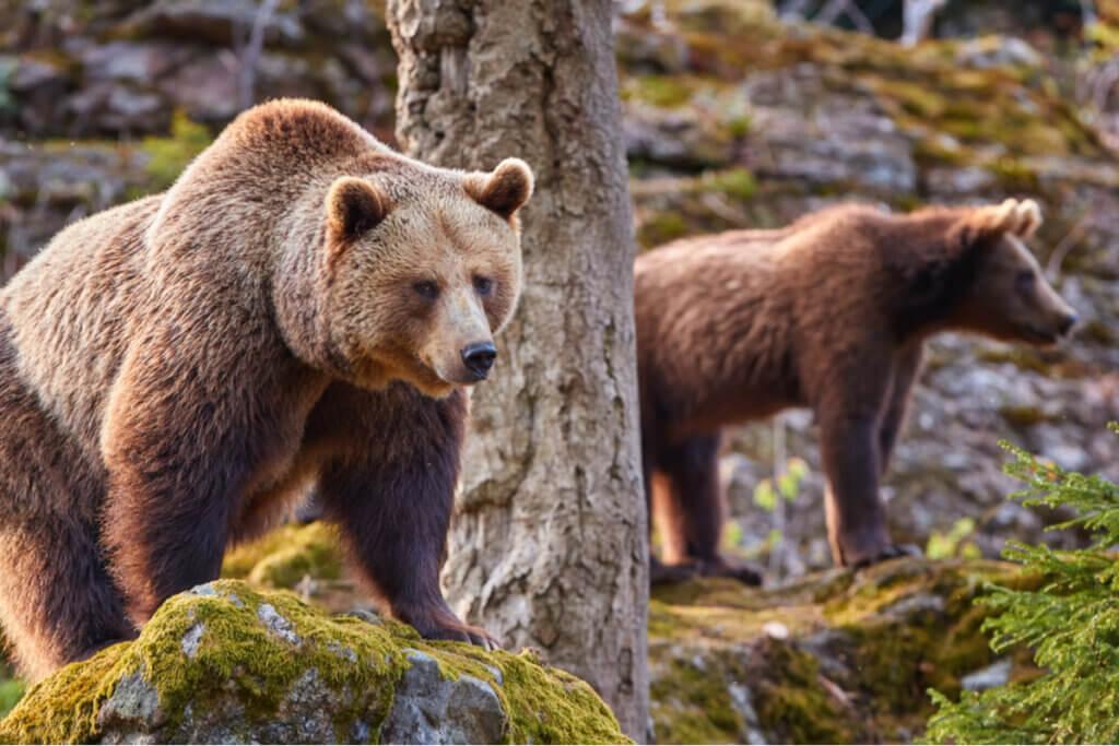 5 animais que hibernam e suas características