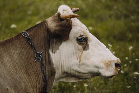 Os melhores documentários sobre animais mostram a necessidade de acabar com certas práticas.
