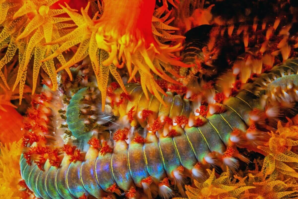 Verme marinho com capacidade de produzir luz.