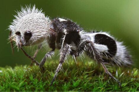 Um dos insetos mais raros do mundo.