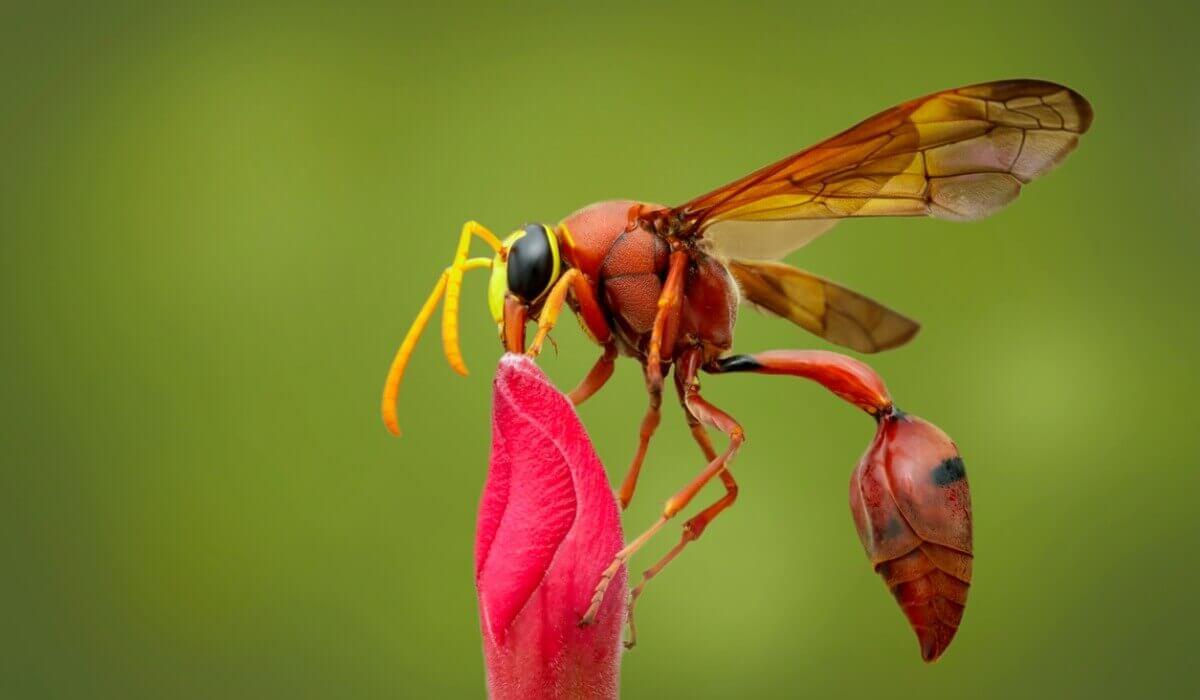 Outro tipo de insetos.
