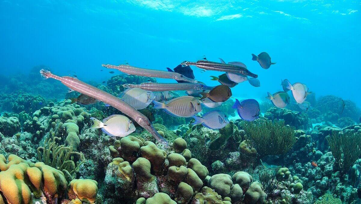 Um grupo de peixes em um recife.