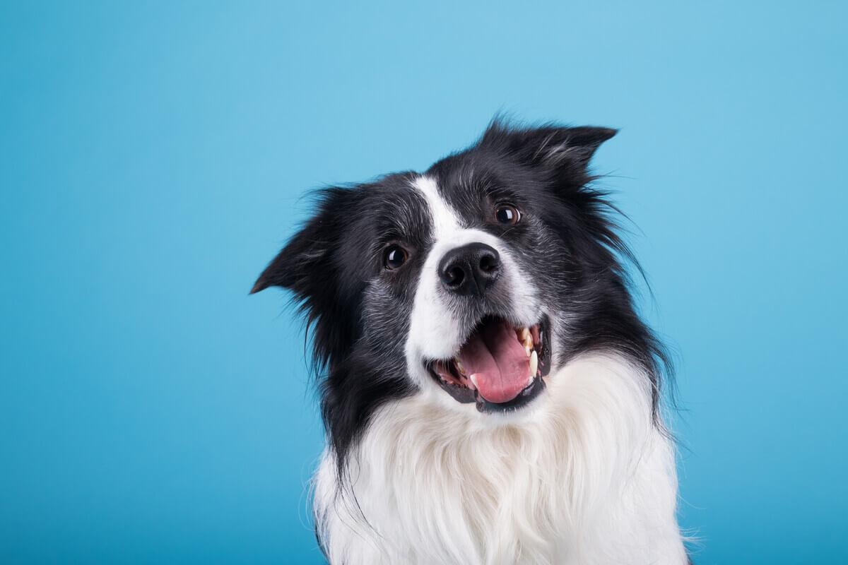 Um cachorro feliz.