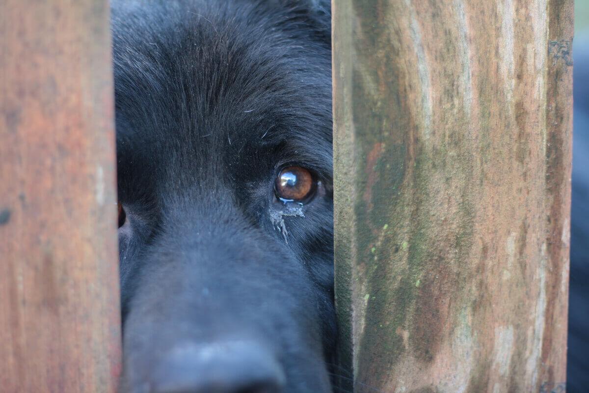 Fazer uma denúncia de abuso de animais é essencial.