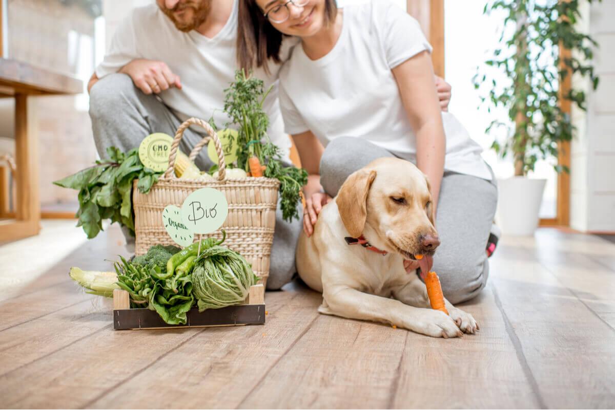 A dieta vegana para animais de estimação não é completa.