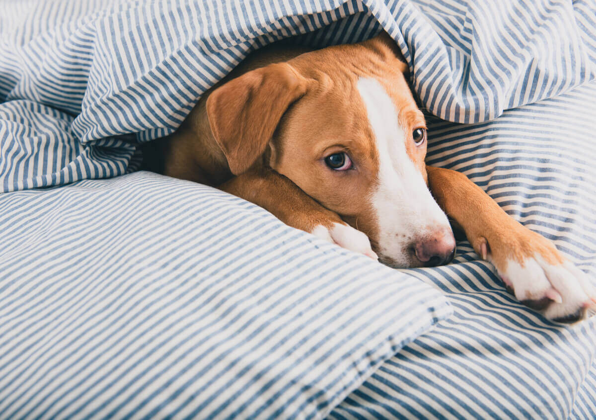 Você sabe ajudar um cão com depressão?