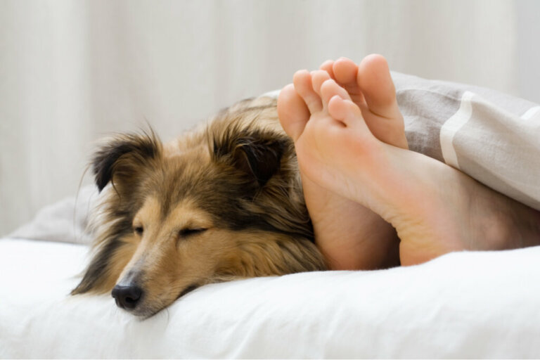 5 motivos pelos quais seu cão dorme ao seu lado