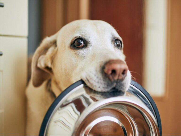 Os cães podem comer kiwi?