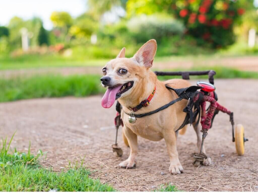 Ortopedia para cães: tudo o que você precisa saber