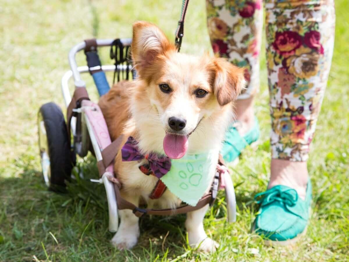 Um exemplo de ortopedia em cães.