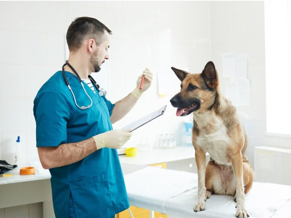 Hemodiálise em cães e gatos: tudo o que você precisa saber