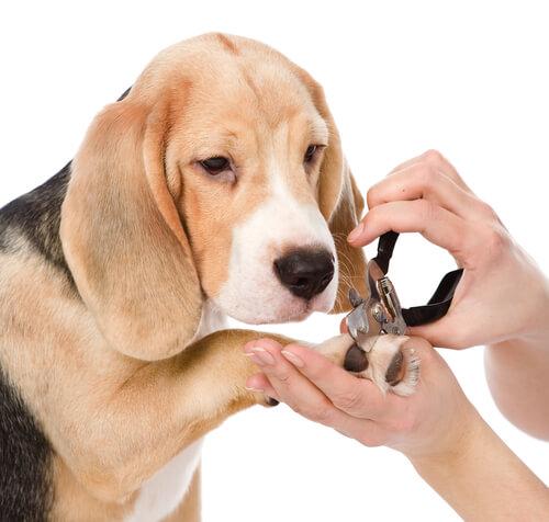 Cão tendo suas unhas cortadas