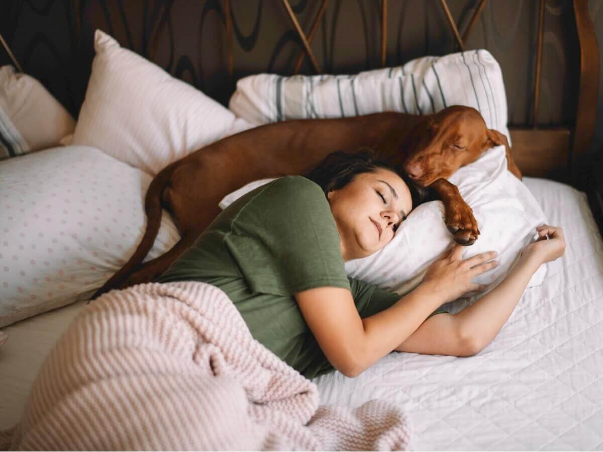Motivos que levam o cão a dormir ao seu lado