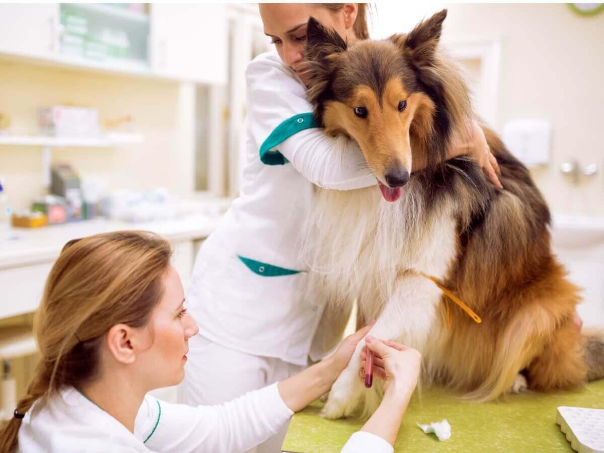 Um cachorro doente no veterinário.