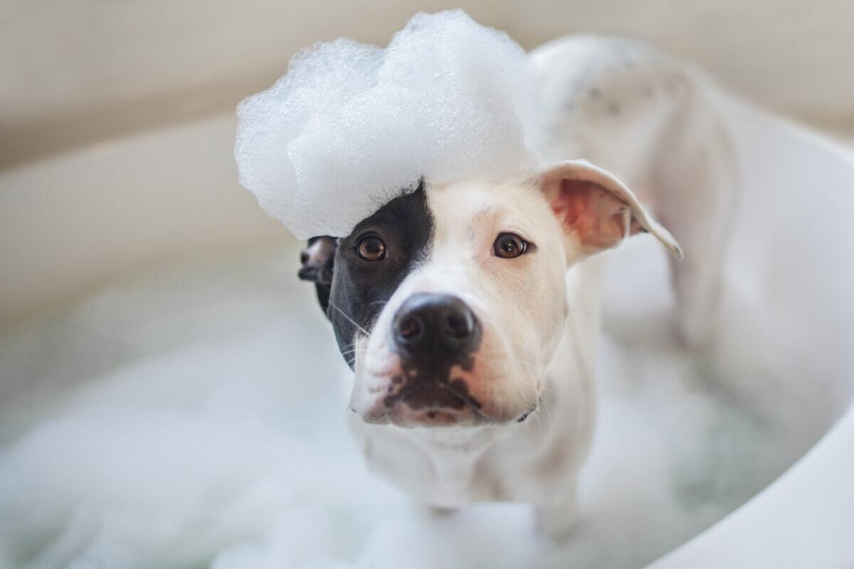 Um cachorro no banho.