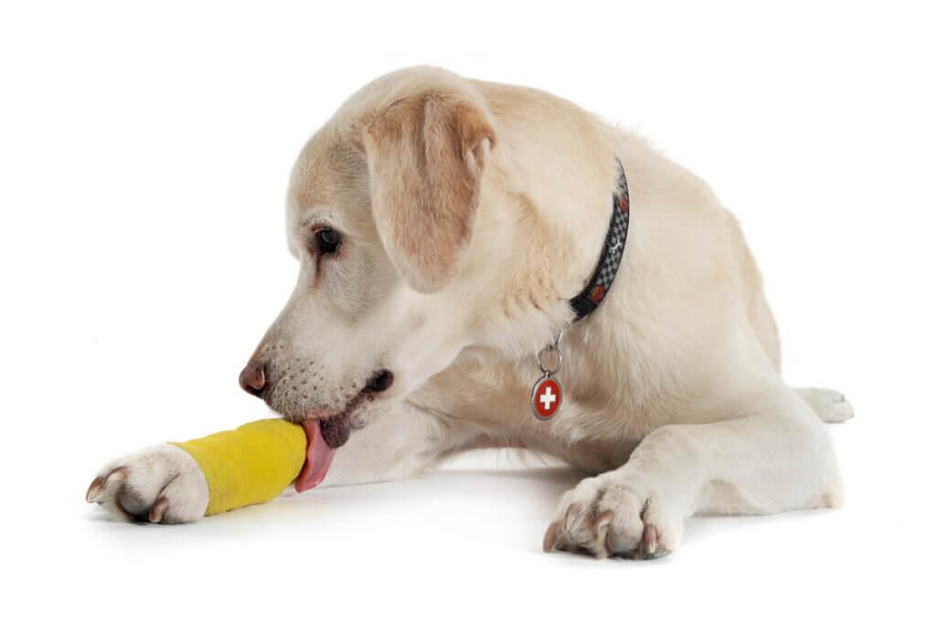 Entorse em cães: causas, sintomas e tratamento