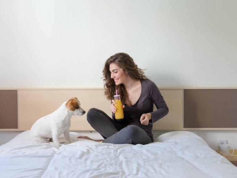 Os cães podem comer mamão?