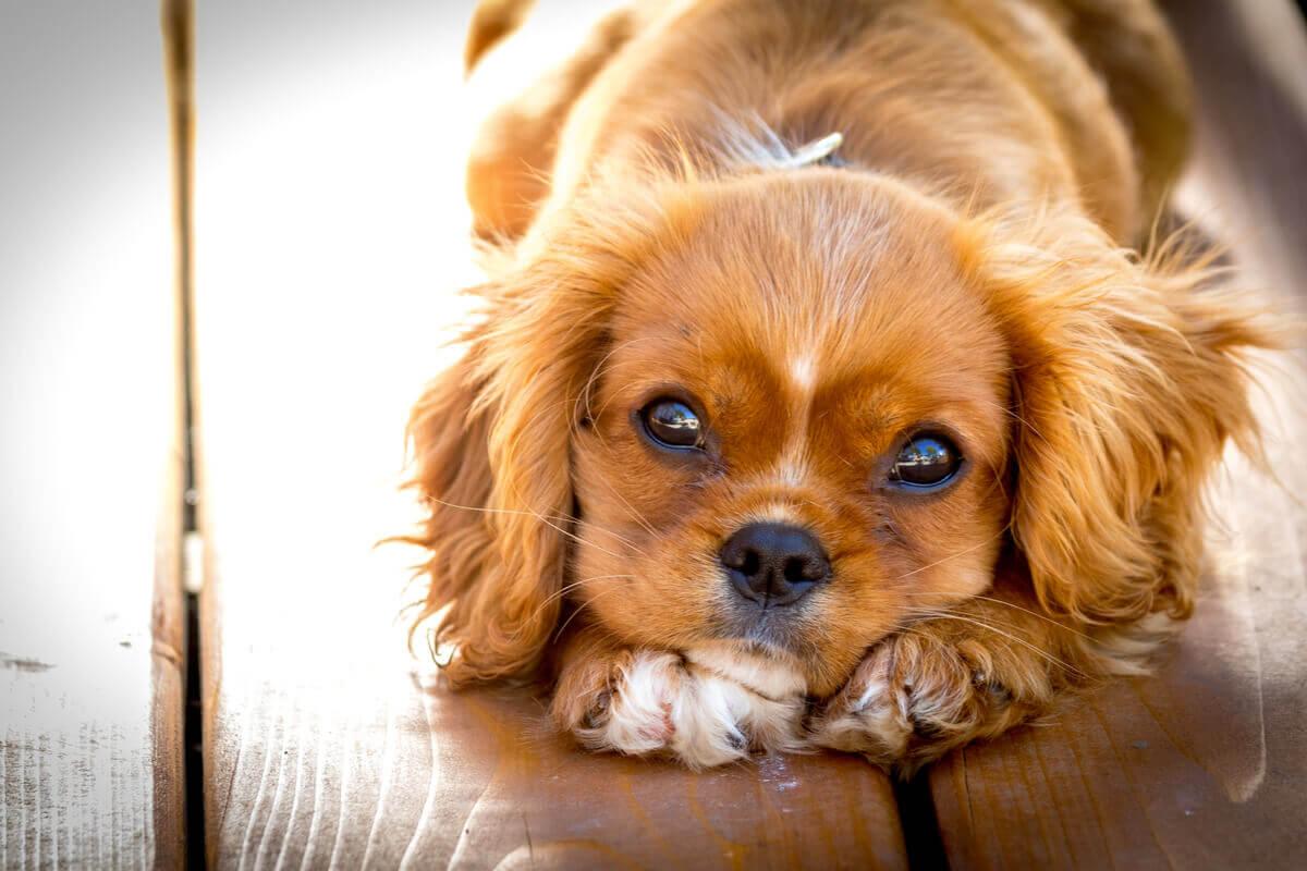 Metade dos cães dados no Natal acabam abandonados.