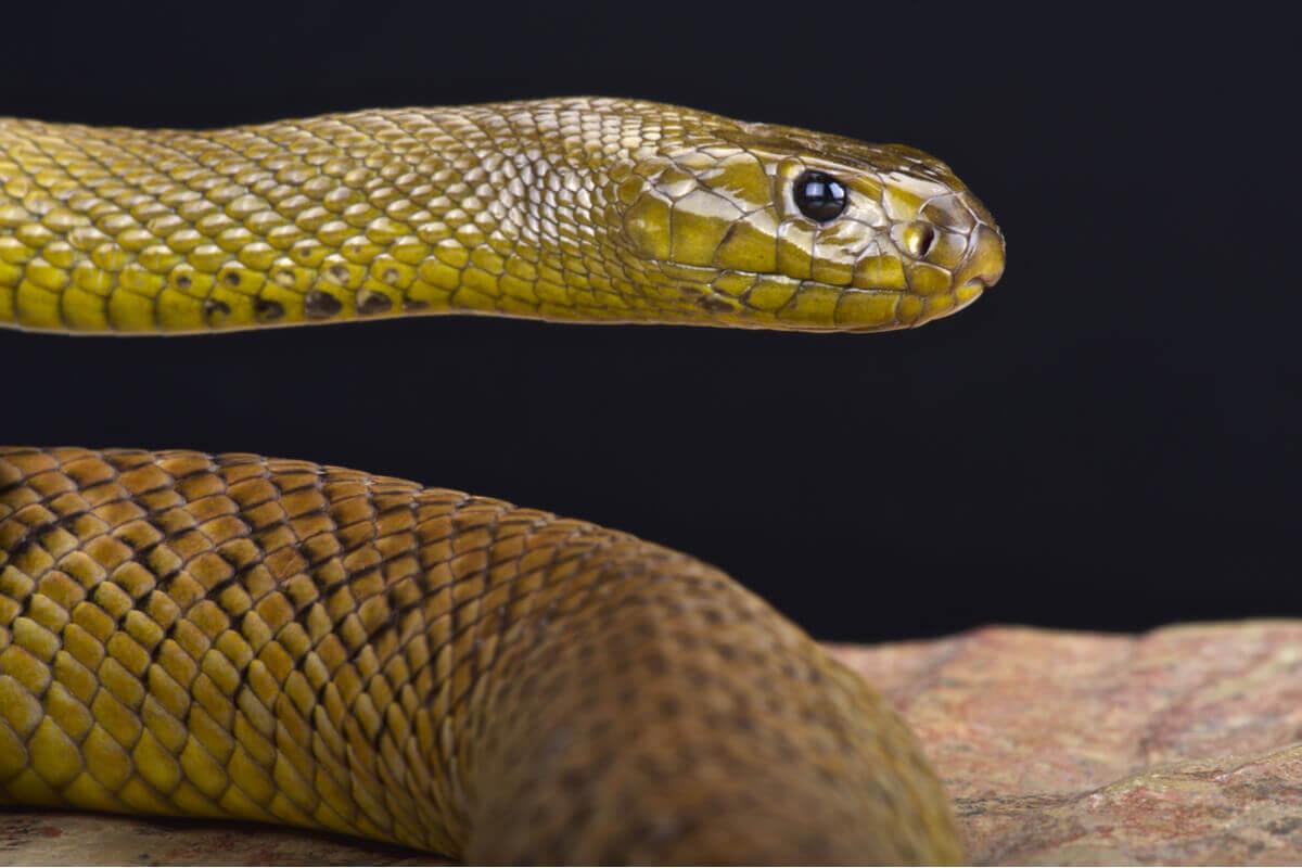 Saiba mais sobre o comportamento das cobras